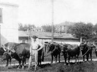 Logging Oxen
